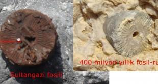 Sultangazi fosili ve 400 milyon yıllık rusya fosili